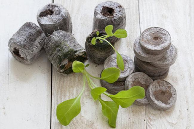 Посадка петунии на рассаду из семян в домашних условиях