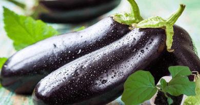 Рассада баклажан — посадка и выращивание в домашних условиях