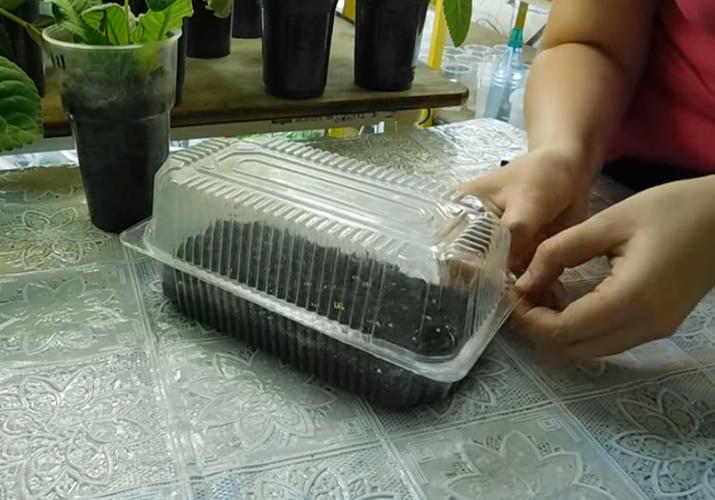 посев баклажан в кипяток