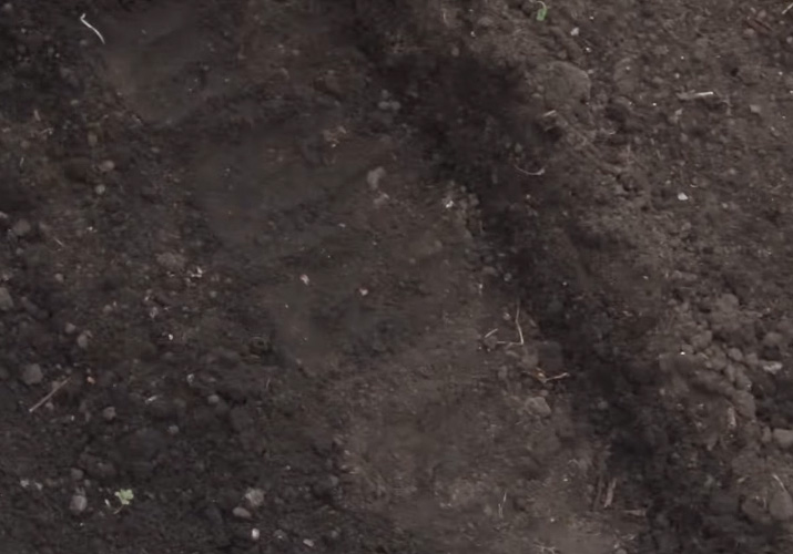posadka-svekly-semenami