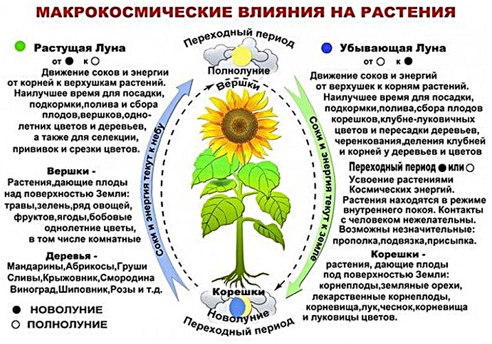 lunnyj-posevnoj-kalendar-sadovoda-i-ogorodnika-na-2019-god