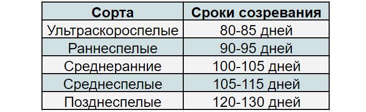 сроки созревания томатов