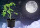 лунный календарь посева помидоров