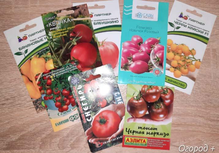 выбор семян помидоров по регионам